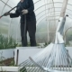 Grandmother in a Greenhouse Watering Seedlings, Summer Day, - VideoHive Item for Sale