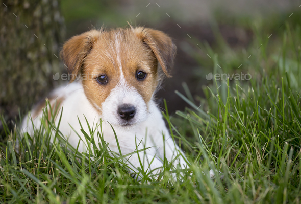 Funny dog puppy looking in the grass - Stock Photo - Images
