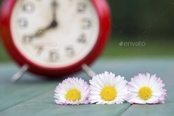 Summertime, time - white flowers with alarm clock - Stock Photo - Images