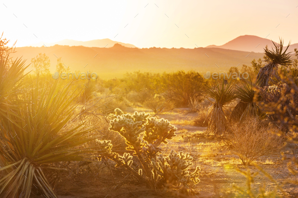 Cactus - Stock Photo - Images