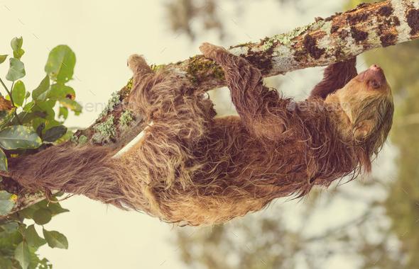 Sloth - Stock Photo - Images