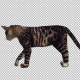 Cat Idle - VideoHive Item for Sale