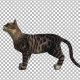 Cat Meow  - VideoHive Item for Sale