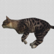 Cat Running - VideoHive Item for Sale