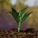 Young Plant Growing In Sunlight - VideoHive Item for Sale