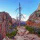 Landscape view of Zion sandstone canyons and dry tree, Utah, USA - PhotoDune Item for Sale