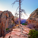 Zion valley sunrise landscape view with dry tree, Utah - PhotoDune Item for Sale