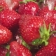 on a Strawberry Under Drops of Water - VideoHive Item for Sale