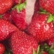 Stream of Water Pours onto a Strawberry in a Colander - VideoHive Item for Sale