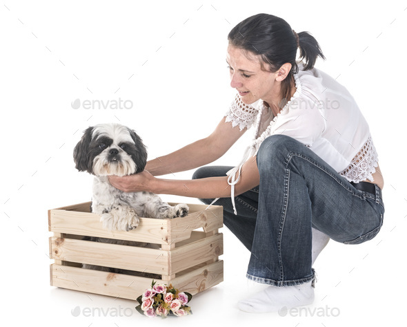 shih tzu and woman - Stock Photo - Images
