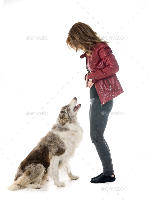 border collie and woman - Stock Photo - Images