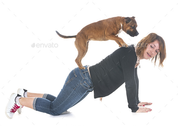 staffordshire bull terrier and woman - Stock Photo - Images