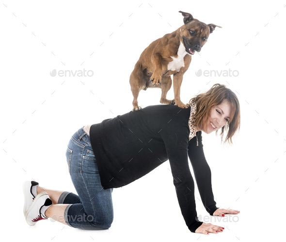 staffie and woman - Stock Photo - Images