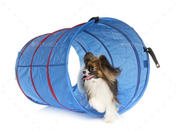 training of agility - Stock Photo - Images