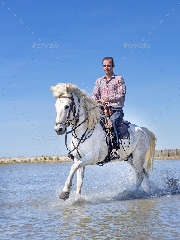 rider and horse on the beach - Stock Photo - Images