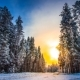Winter Forest with Pines and Sun Scenery - VideoHive Item for Sale