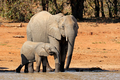 African elephants at a waterhole - PhotoDune Item for Sale