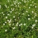 Top View of White Dandelions in Meadow - VideoHive Item for Sale