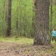 Two Girls Run Through the Forest and Talk. - VideoHive Item for Sale