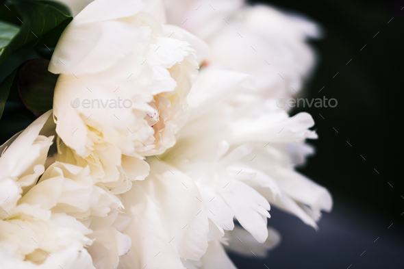 Floral background. Pink and white peonies pattern. Bouquet of peonies - Stock Photo - Images