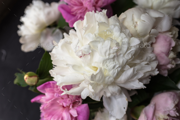 Peonies bouquet on black background - Stock Photo - Images