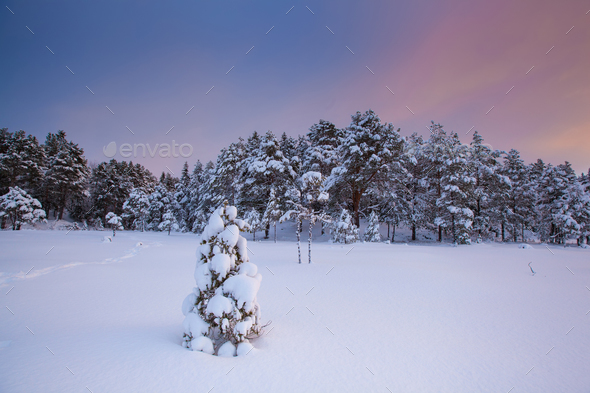 beautiful winter landscape snow tree - Stock Photo - Images