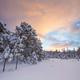 beautiful winter landscape snow tree - PhotoDune Item for Sale