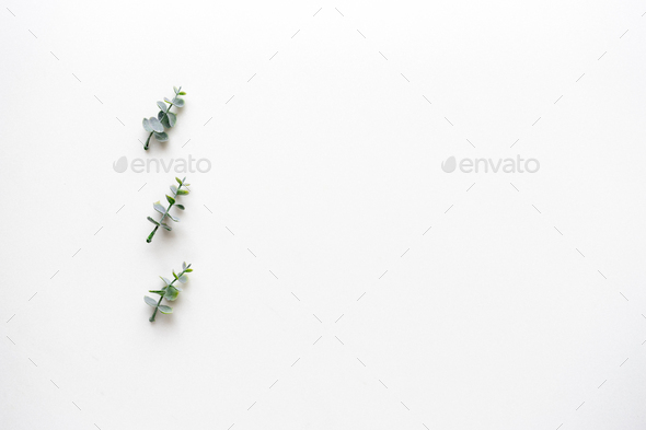 Oregano branches on white marble. Top view. - Stock Photo - Images