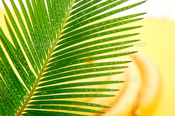 Banana with palm leaf - Stock Photo - Images