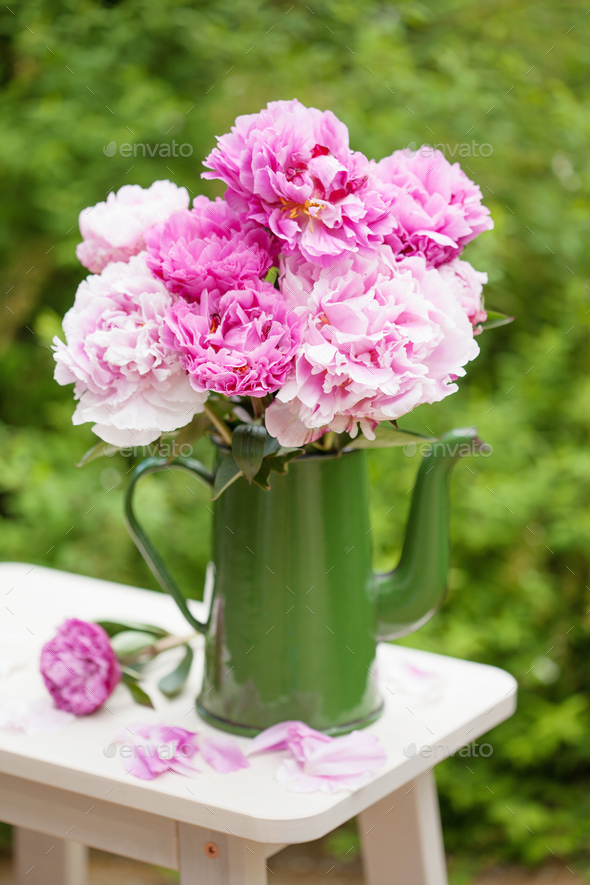 beautiful pink peony flowers bouquet in garden - Stock Photo - Images