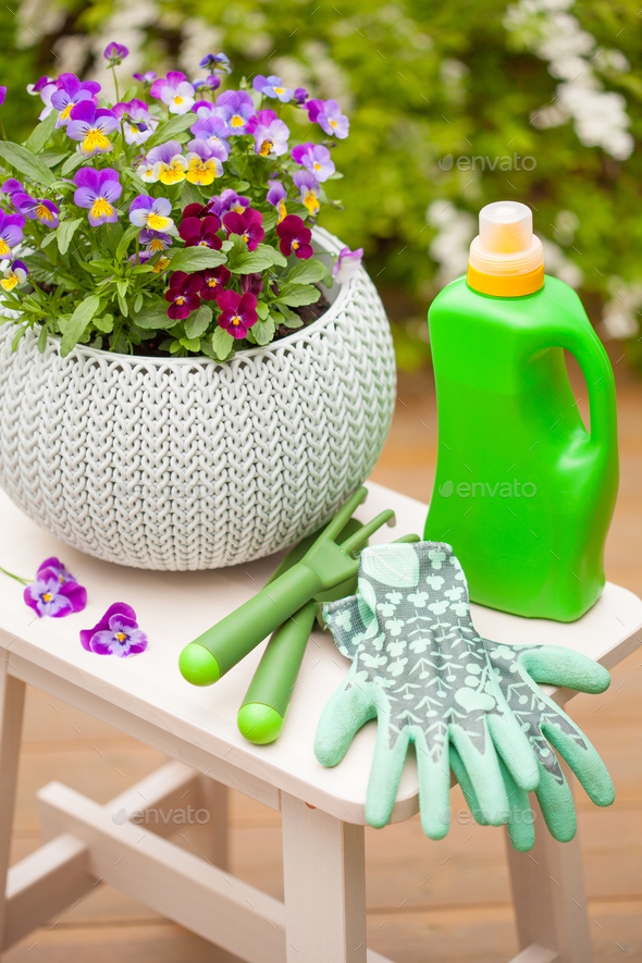 beautiful pansy summer flowers in garden, fertilizer, gloves, to - Stock Photo - Images