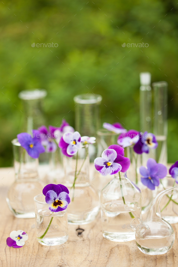 pansy flowers in chemical glassware, table decoration in garden - Stock Photo - Images