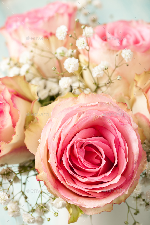 Pink roses on blue background - Stock Photo - Images