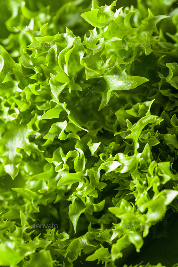fresh green salad leaf background - Stock Photo - Images