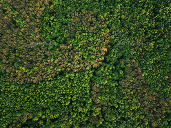 Aerial view of the green mixed deciduous-coniferous forest - Stock Photo - Images