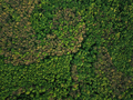 Aerial view of the green mixed deciduous-coniferous forest - PhotoDune Item for Sale