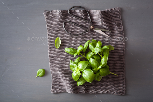 fresh basil herb on grey background - Stock Photo - Images