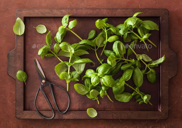 fresh basil herb on brown background - Stock Photo - Images