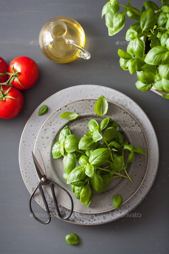 fresh basil herb on grey background - Stock Photo - Images