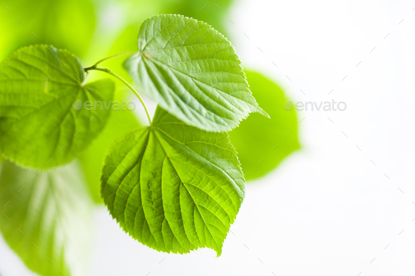 fresh green leaves natural background - Stock Photo - Images