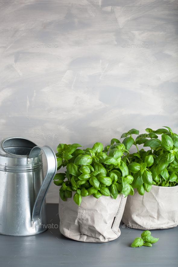 fresh basil herb in paper bag pot - Stock Photo - Images