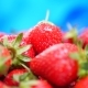 Fresh Strawberries in a Bowl at Blue Background - VideoHive Item for Sale