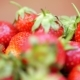Fresh Strawberries in a Bowl at Orange Background - VideoHive Item for Sale