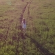 Girl Running in Wheat Field at Sunset - VideoHive Item for Sale
