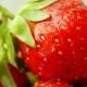Fresh Strawberries in a Bowl - VideoHive Item for Sale