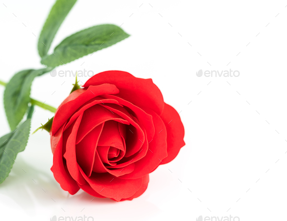 Single Red plastic fake roses on white_-4 - Stock Photo - Images
