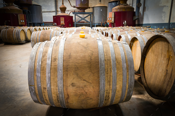 Wine barrels in the cellar of the winery-4 - Stock Photo - Images