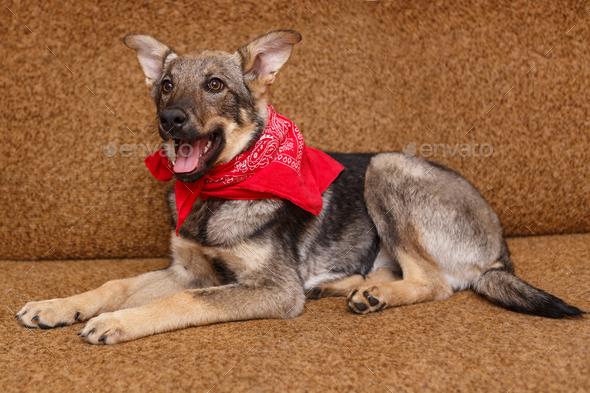 Playful puppy big dog - Stock Photo - Images