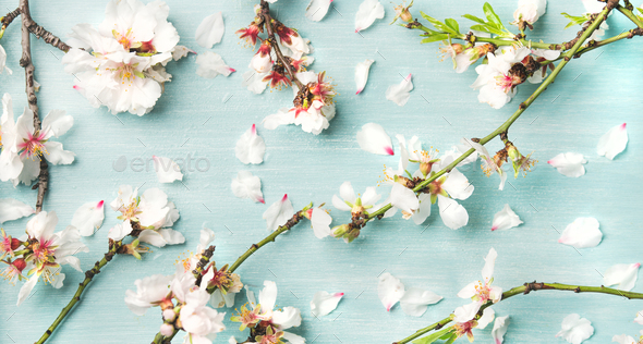 Spring Floral Background And Texture With White Almond Flowers Stock