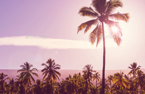 Palm plantation - Stock Photo - Images
